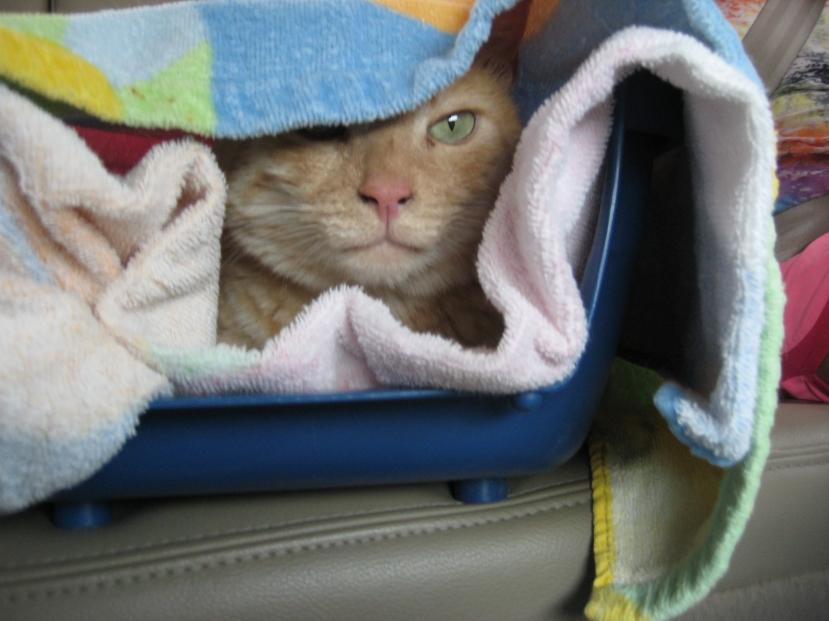 Jambi the Road Kitty