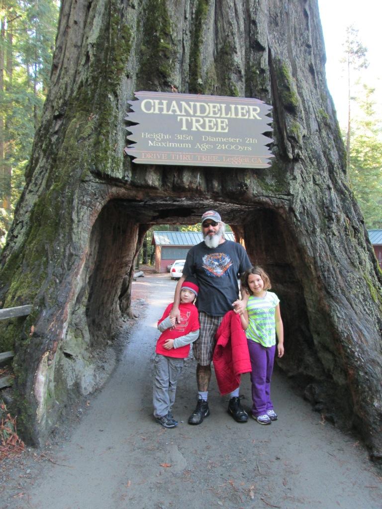 Chandelier Tree, CA