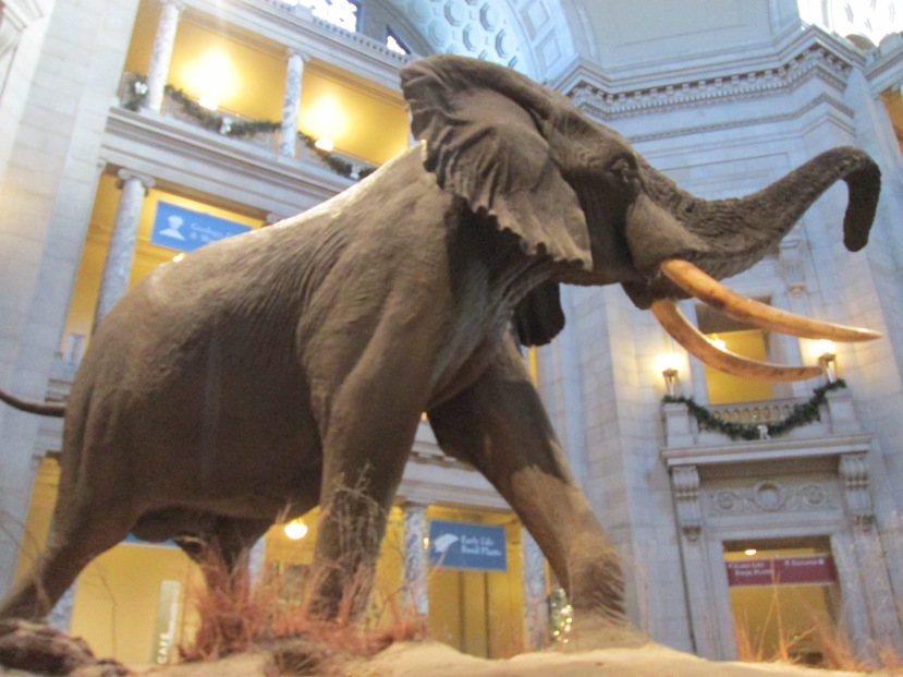 Smithsonian - Museum of Natural History