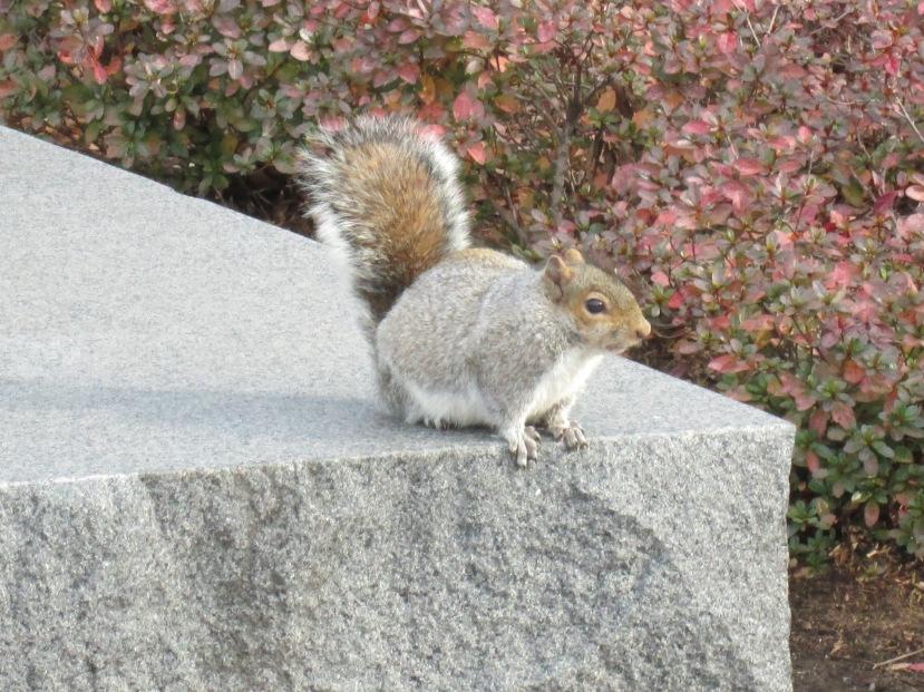 The Squirrels of DC, Washington DC