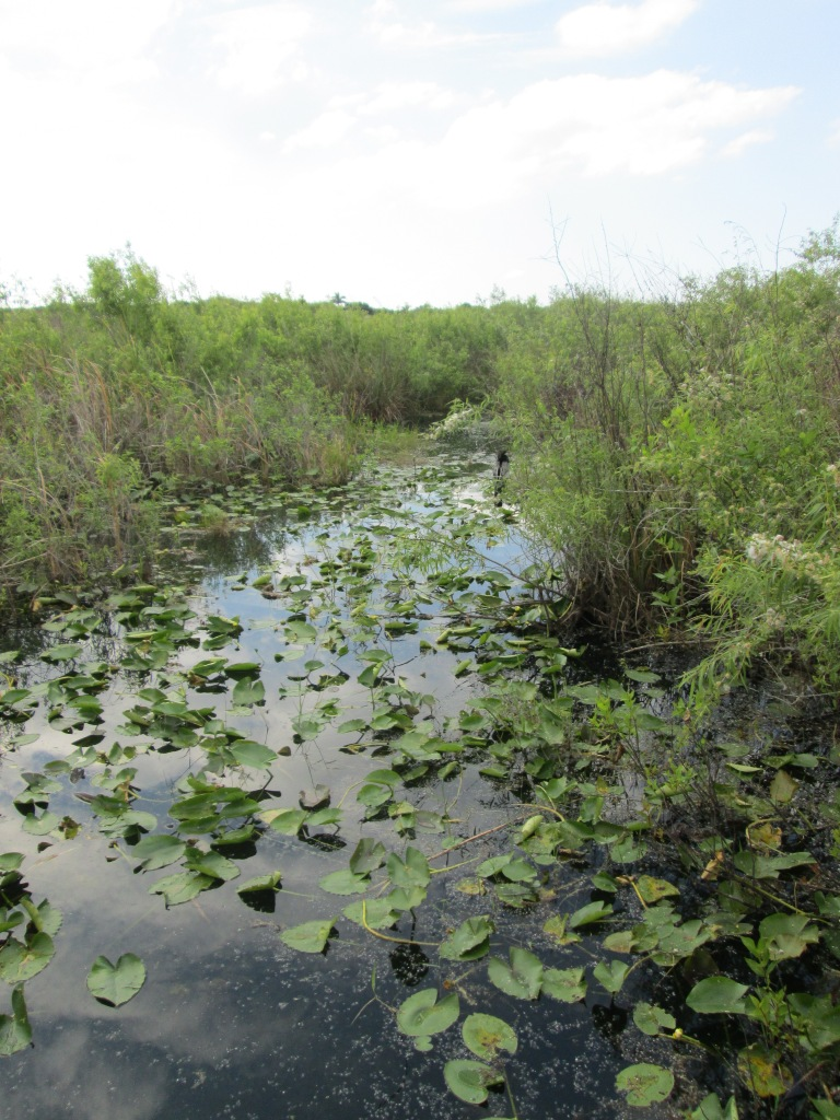 Anhinga Trail, Everglades National Park, Florida