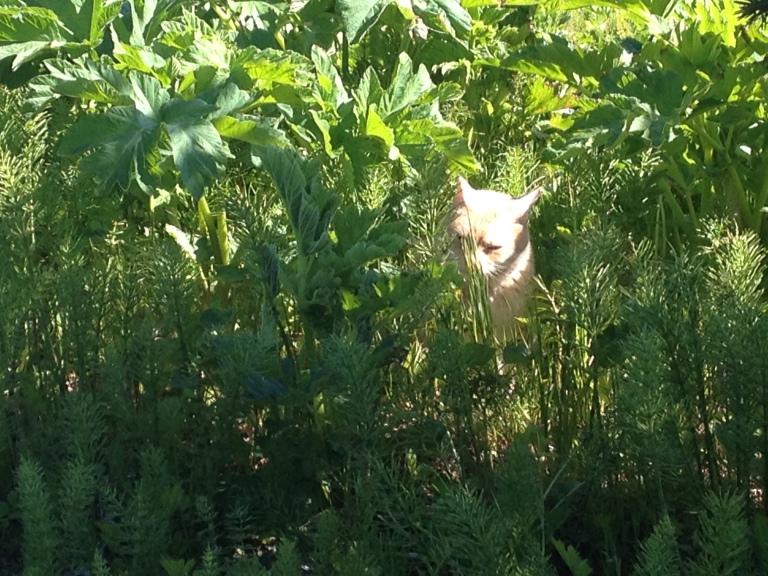 Jambi Hunter Kitty